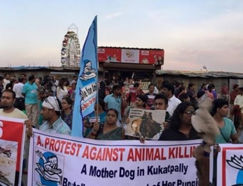 A Walk for a Mother – Rally Against Animal Abuse