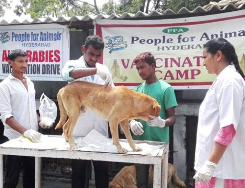 10th World Rabies Day