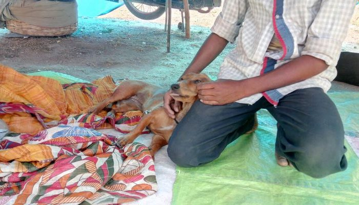 People For Animals – Hyderabad & Secunderabad
