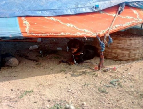 Stolen dogs rescued from hut dwellers
